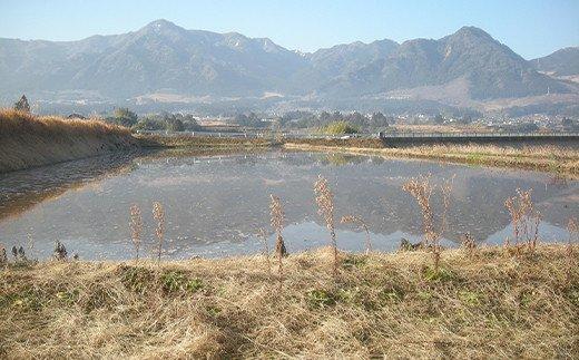 令和3年産特別栽培米 いのちの壱(白米)2kg×2