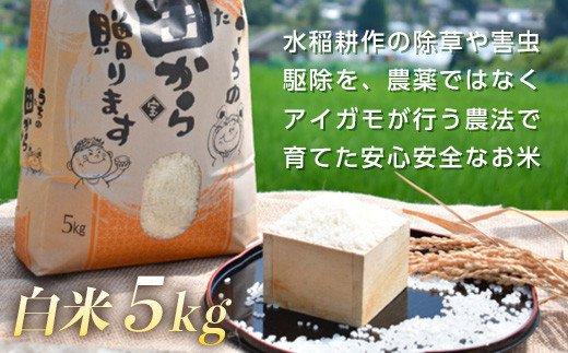 令和3年産 アイガモ農法 コシヒカリ白米 5kg