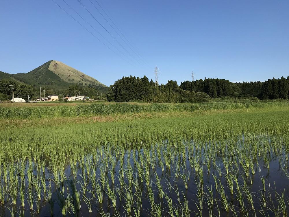 令和3年産特別栽培米 いのちの壱(玄米)10kg×2