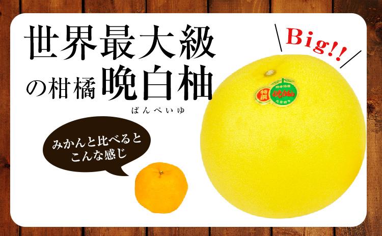 晩白柚 2Lサイズ 2玉入 JAやつしろ 熊本県 氷川町《12月下旬-1月末頃より順次出荷》