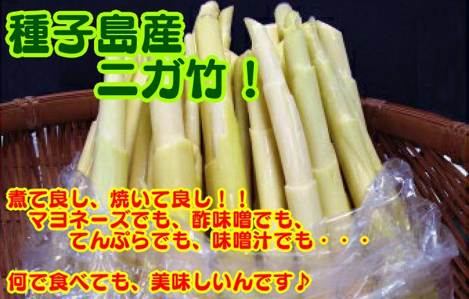 種子島産 春のニガ竹 2kg 300pt