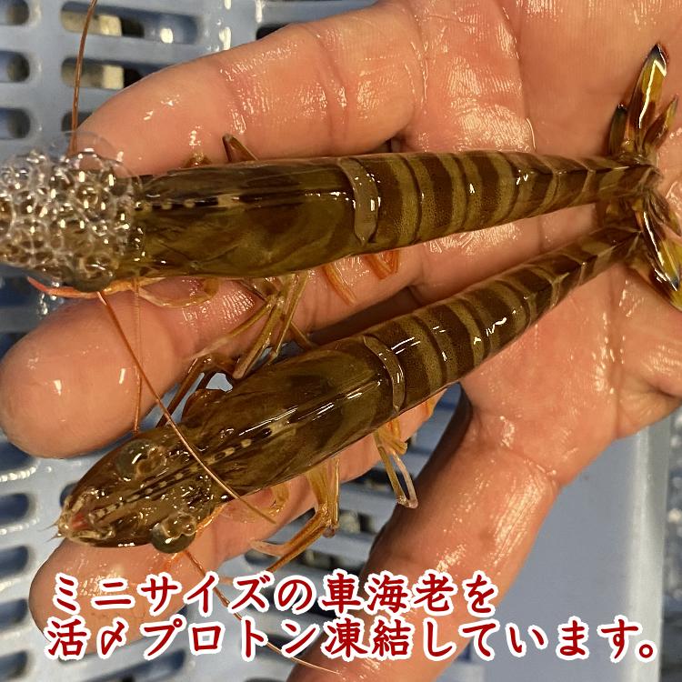 ミニ・車えび(生食用冷凍・化粧箱入り)210g×3パック