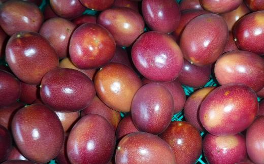 種子島産 パッションフルーツ(20個入り)