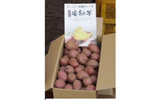 中園ファームの熟成安納芋(生芋)Mサイズ 10kg