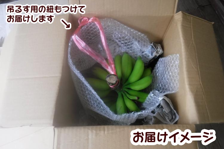 園田バナナ園 北限の露地バナナ 5房【9月~出荷分】