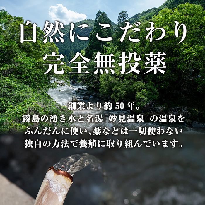 B-128 霧島市育ちのあの「うなぎ」160〜170g×3尾!豊富なわき水と温泉を使った独自の方法で薬を一切使わずに育てた人気の鰻3尾を冷蔵でお届け【田代水産】