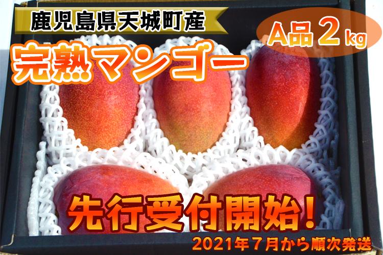 【先行受付開始!】【贈答にもおすすめ】地球に優しい天城マンゴーA品2kg