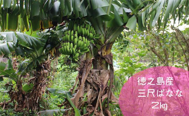 【鹿児島県天城町】徳之島産三尺バナナ 2kg