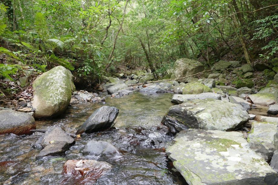 素晴らし島の自然を守ります!『環境保全対策事業』