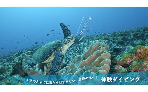 海の生き物にたくさん出会えるダイビング体験