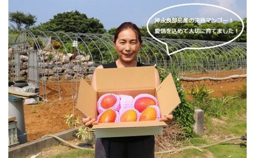 ファーム白川の完熟マンゴー 1kg【先行予約受付】