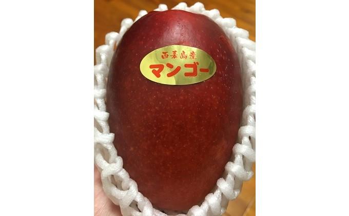 2019年 品評会1位!【2021年発送】西表島産 アップルマンゴー 約700g(2玉)