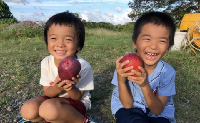 【2021年発送】ますみ農園 完熟 アップルマンゴー 約1kg(2~4玉)