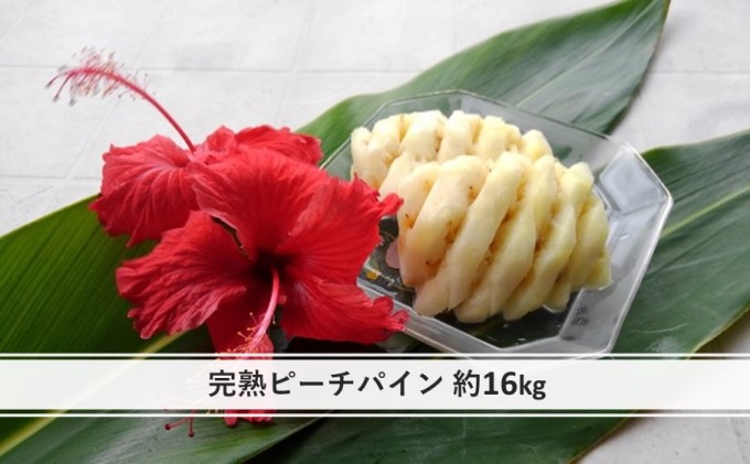 【2021年発送】ちゅら西表島産!!『ゆたか農園』完熟 ピーチパイン 約16kg