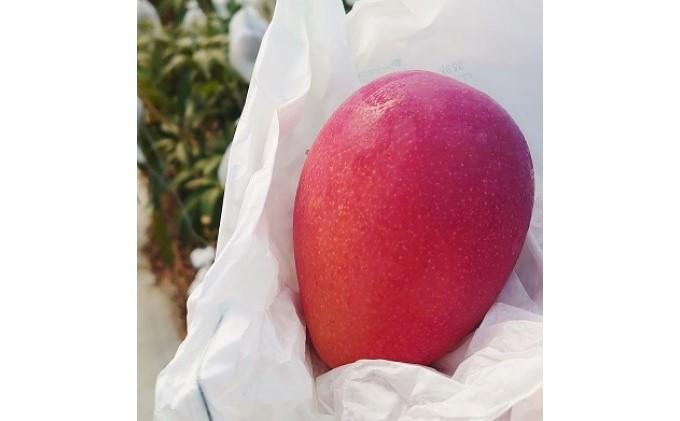 【2021年発送】ますみ農園 完熟 アップルマンゴー 約4kg(8~12玉)