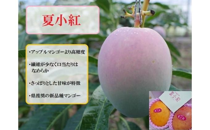 【2021年発送】ますみ農園 3種のマンゴー 食べ比べセット 約2kg