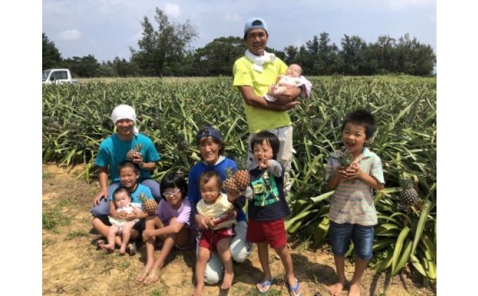【2021年発送】ますみ農園 サンスイートパイン 約7kg(5~8玉)