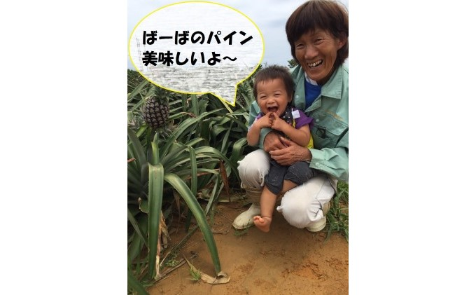 """【2021年発送】ますみ農園""""蜜たっぷり"""" 島パイン(ハワイ種)約11kg(8~13玉)"""