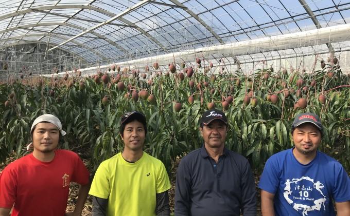 【2021年発送】高糖度保証!!農園ファイミールの濃厚 アップルマンゴー 約2kg(4~6玉入り)
