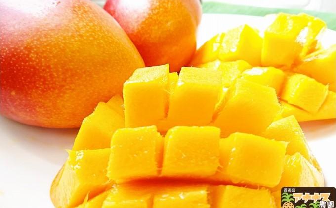 亜熱帯西表島の夏の太陽をいっぱいに浴びた!!アナナス農園の完熟 アップルマンゴー 約1.6kg