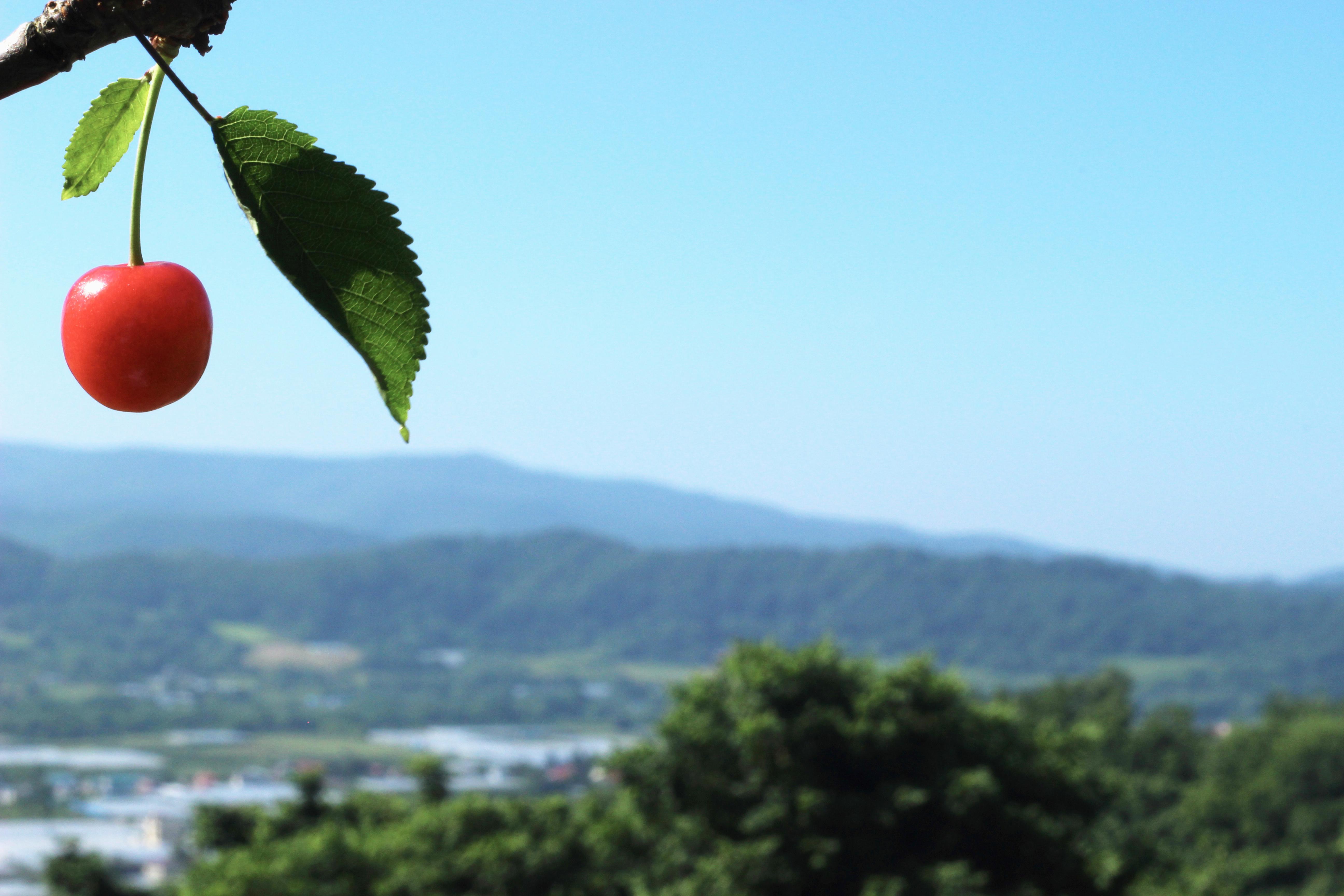「JALふるさと納税」に北海道仁木町が参加しました。