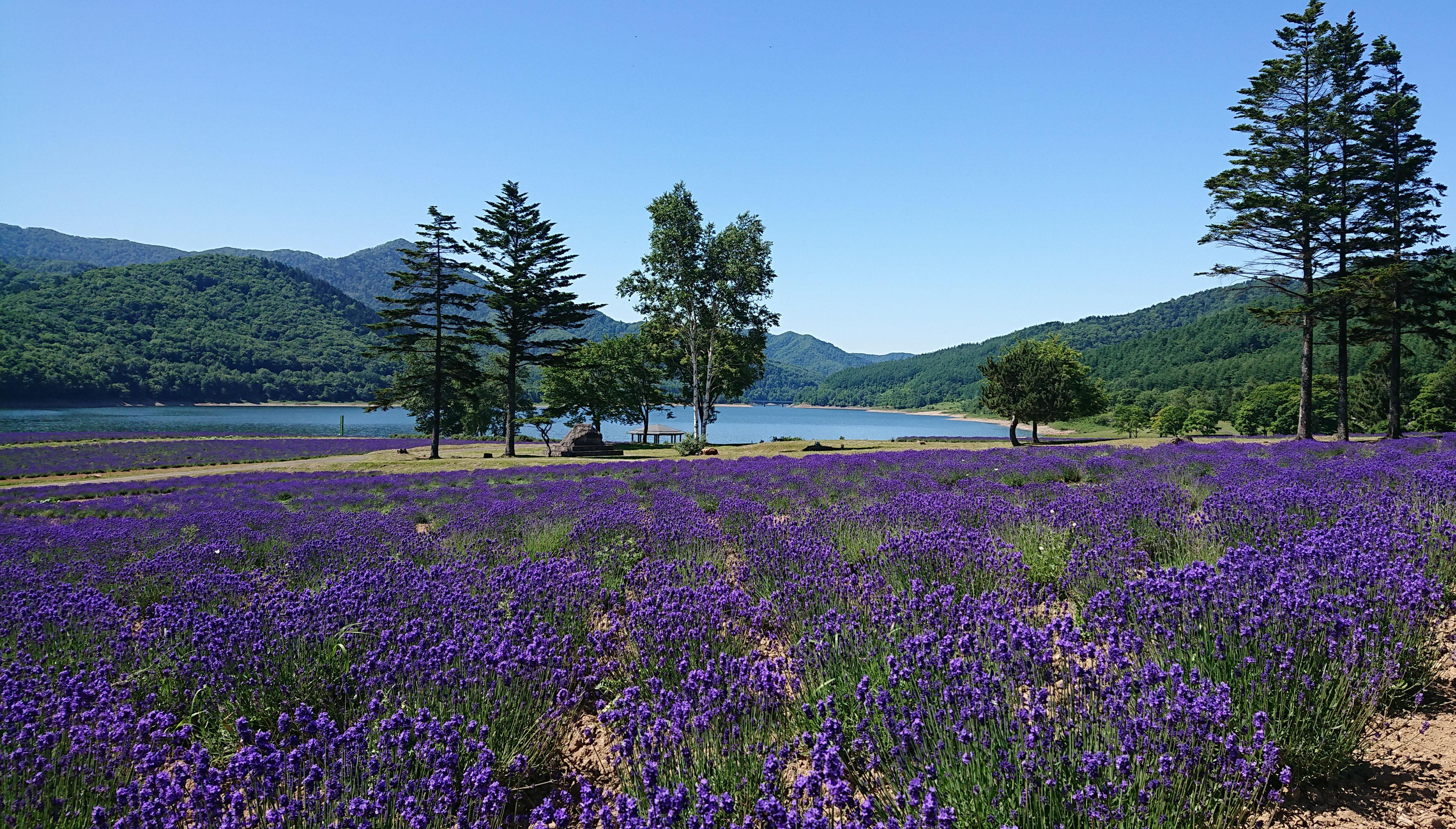 「JALふるさと納税」に北海道南富良野町が参加しました。